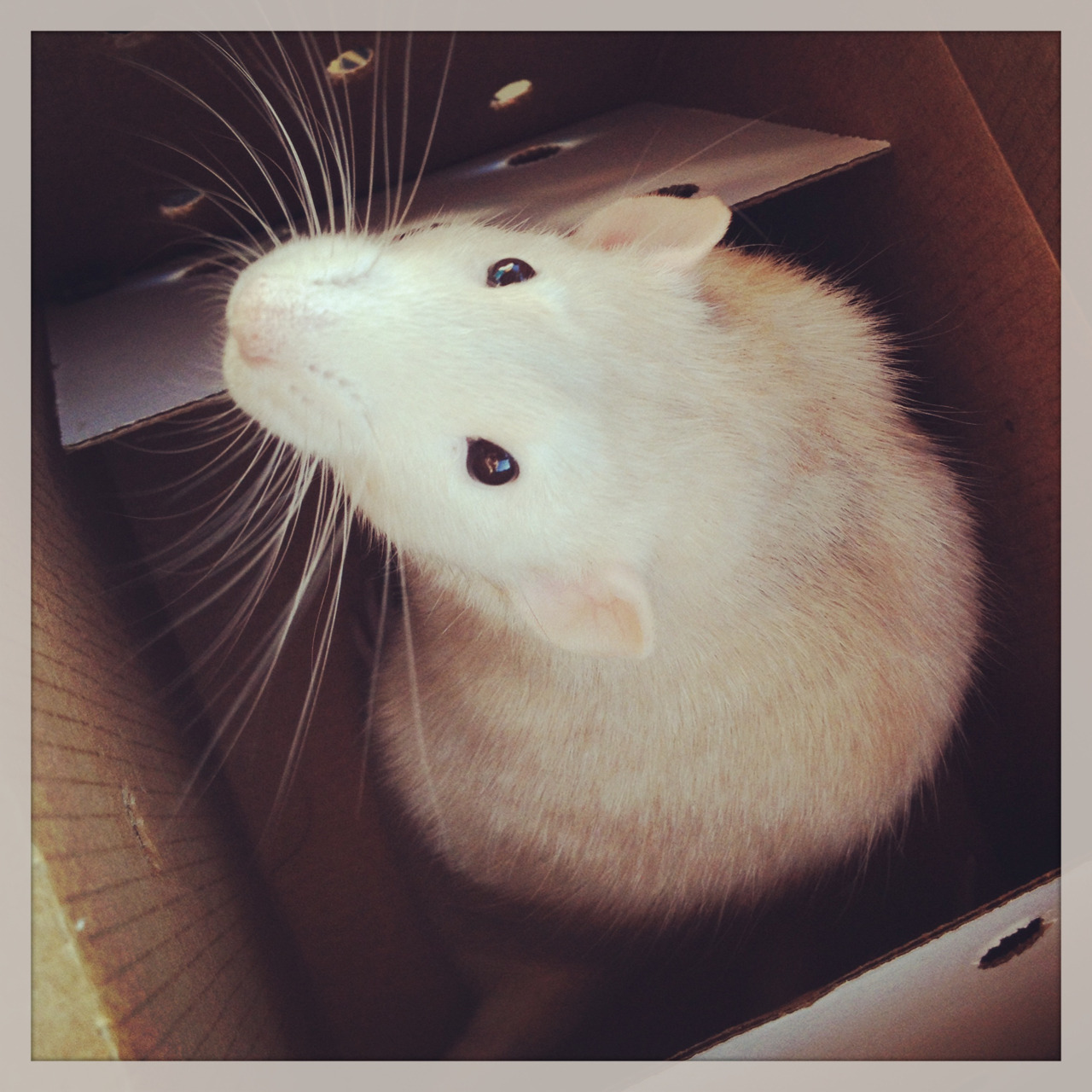 snailba1t:  Got a new rat c: his names Mumford.  Please can I just