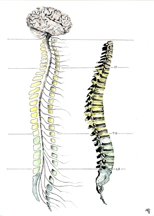 mrflibbers:  Spine commission
