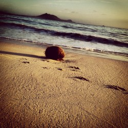 My #coconut 🌴 #kailua #beach #hawaii #ocean #sand #serenity #universe #peace #love #footprints