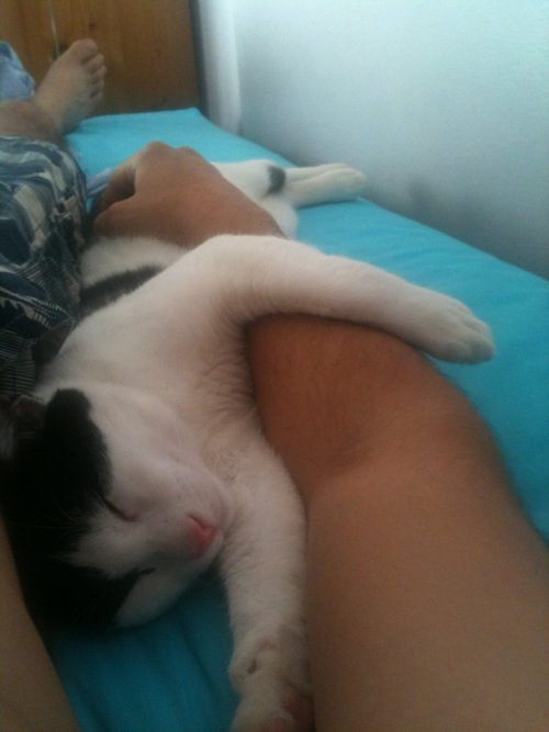 cute-overload:  Can I sleep with you tonight?http://cute-overload.tumblr.com