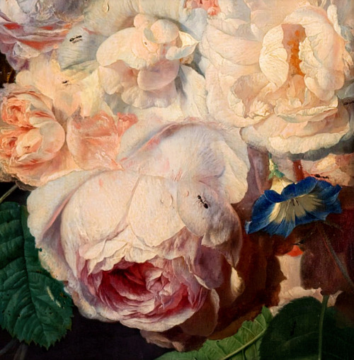 Jan van Huysum | Still Life with Flowers and Fruit (detail with rose). c.1700-49.