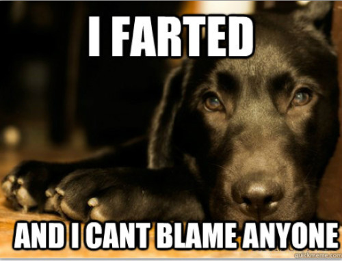 buzzfeedanimals:  First World Dog Problems