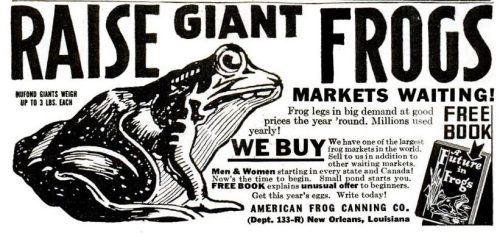 Raise Giant Frogs. (1950s)