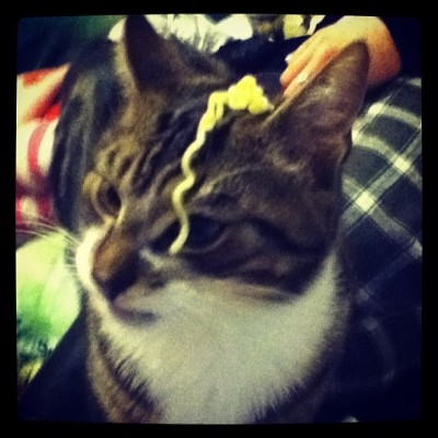 Put super noodles on the cats face and he did not like it😄
