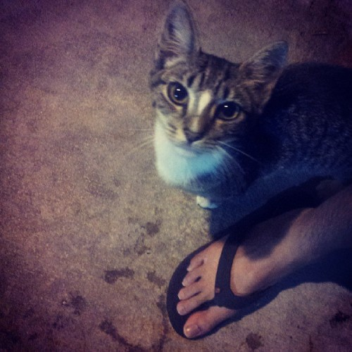 And this stray #cat in the hotel makes love to my legs again … hahaha