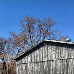#barn #buds #budding #leaves #sky #nwct #newengland #morningwalk #tree #sky #sunshine #spring #nofilter #now #maplesyrupfarm