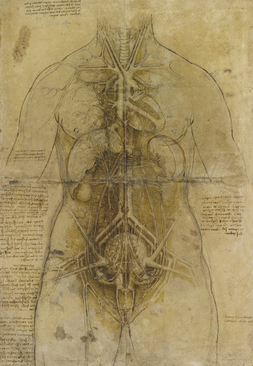 The cardiovascular system and principal organs of a woman. Black chalk, some red chalk, pen and ink, brush and ink, yellow wash, the outlines pricked, on paper washed buff. 33,2x47,6 cm. Drawing bu Leonardo Da Vinci.