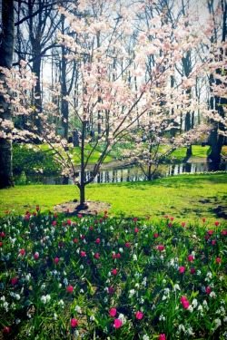 The Most beautiful Spring Park in  the world!!! #KEUKENHOF #AMSTERDAM #APRIL2013
