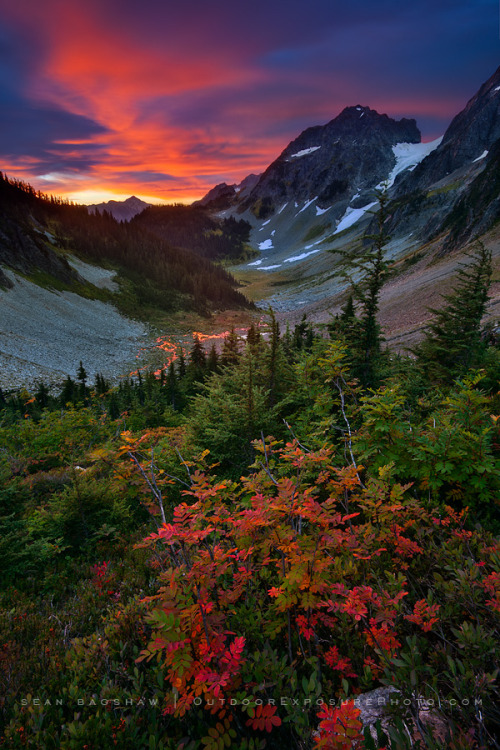 woodendreams:   (by Sean Bagshaw)