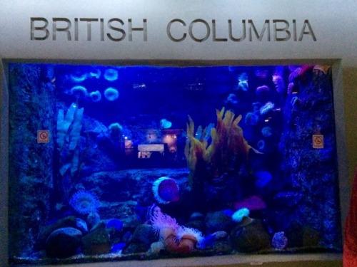 Dallas World Aquarium Tumblr