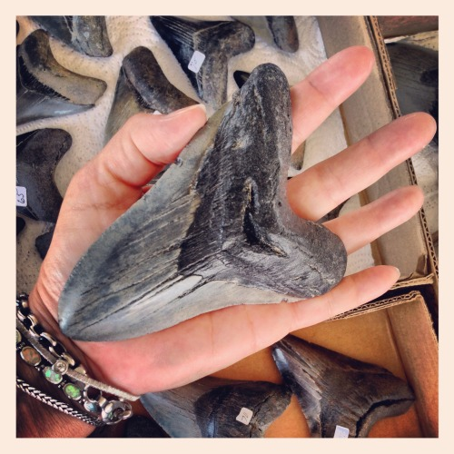 Ancient shark tooth!   (iPhone foto)
