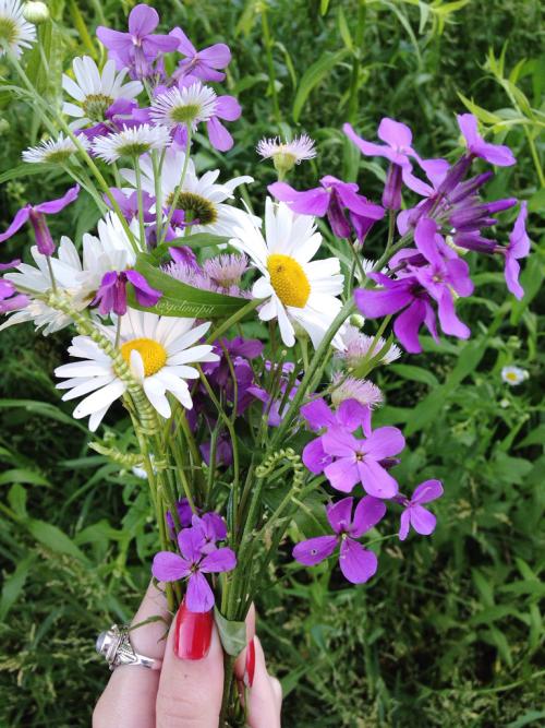 personal summer solstice litha midsummer flowers wild flowers daisy dasies vines