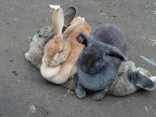 foggyshamrock:  livenudegirl:  porcelain-horse-horselain:  rabbits are such assholes sometimes, i swear to god.  They totally are.
