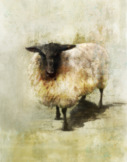 eatsleepdraw:  Ken RokoBlack Sheep 01: Giclee Fine Art Print 11X14Please check out more images from FB Fan Page:  http://www.facebook.com/pages/Art-by-Ken-Roko/394013960682876 Etsy.com:http://www.etsy.com/shop/krokoart?section_id=12474863Tumblr:http://krokoart.tumblr.com/
