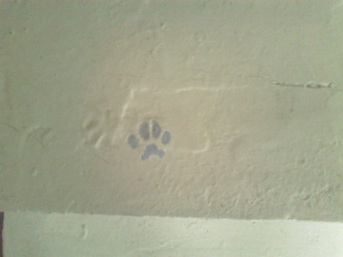 kitty footprint