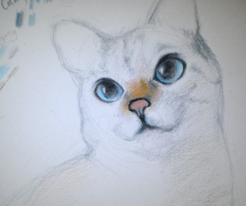 DD#3: Nala! (WIP) Or at least I tried.. I made her eyes a bit more relaxed, she looks more alert/cuter in the reference ;_; Drawn with Prismacolor/Utrecht color pencils. I'm gonna finish this in the next few days!