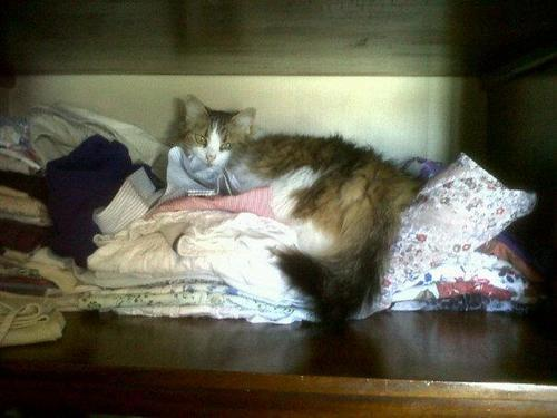 that's not how you pick what to wear cat.