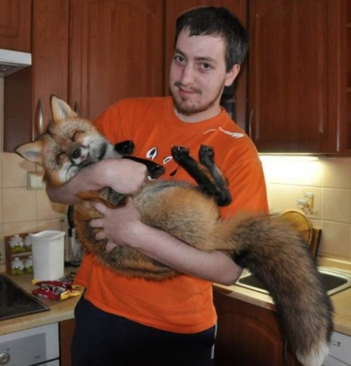 buzzfeed:  Foxes seem like they would be the perfect pet. They worked out for these people.  I think for me part of the charm of foxes is that they aren't really mean to be tamed or kept as pets, at least not in a capacity where they wouldn't eventually be released back in the wild but so help me it doesn't stop me from wanting one any less and if Salvador Dali can have an anteater