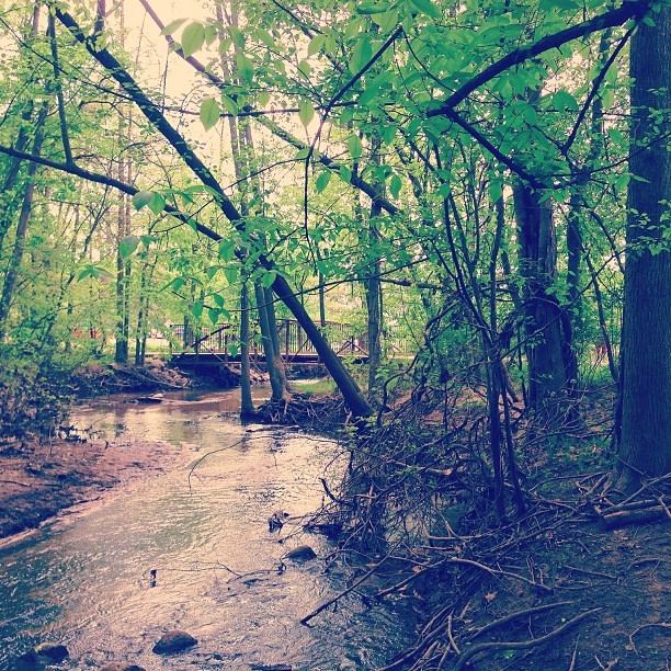 #forest exploring in grand rapids, mi.