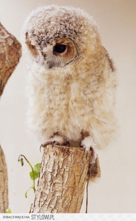 Owl pe We Heart It http://weheartit.com/entry/52134827/via/NoNieMogeJuz