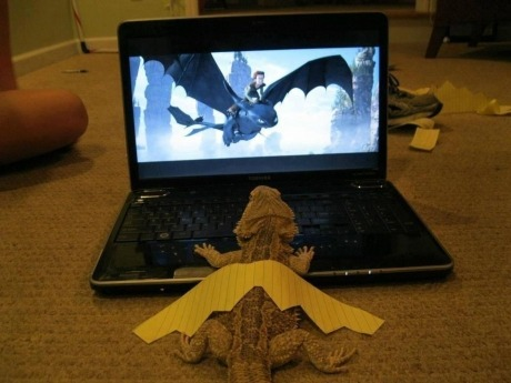 growmybones:  follow your dreams..  I fucking want a bearded dragon. =(