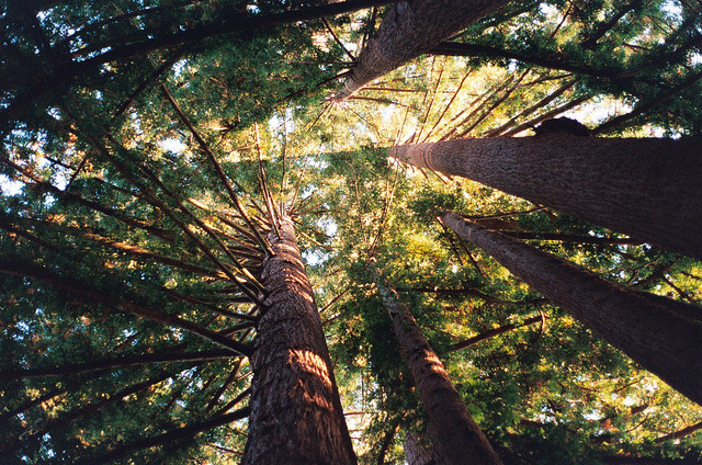 savvydarling:  Forest by Lauren Fowler on Flickr.