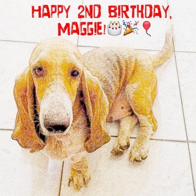 Happy 2nd, baby! :) #Feb6 #bassethound #hushpuppy #maggie #happy2nd #insta_pet #instapet #dog #pet #instamood #instahabit #igdaily #igersmanila