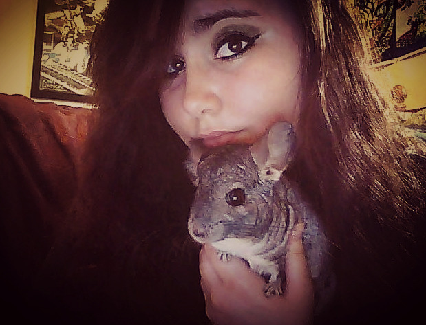 melmelmarie:  one of my chinchillas, mango <3