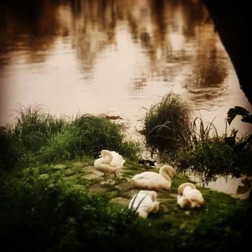 #naturelovers #nature_seekers #naturestyle_gf #nature #ighdr #igersoftheday #photooftheday #hattingen #germany #summer #animals #animalsofinstagram #river #water  (hier: Henrichshütte Hattingen)