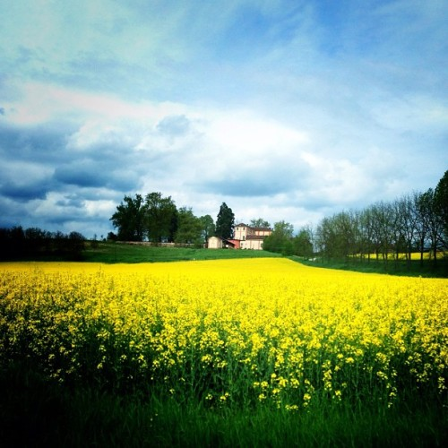 #countrysidemarvellous #iloveyellow