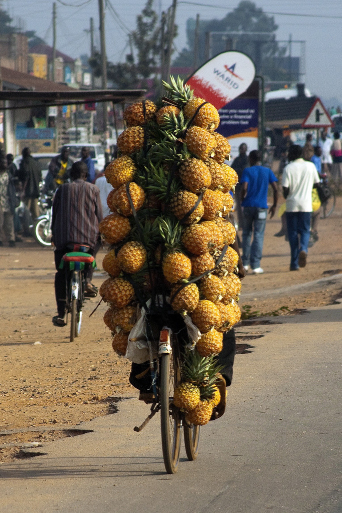 typicalugandan:  Pineapple bike: A man carries pineapples on his bicycle to offload at the market, Kampala, Uganda. (Photography by rob gipman)