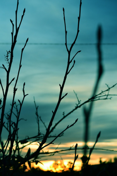 beautifuldimension:  tempuros: Sundown Trhough Branches