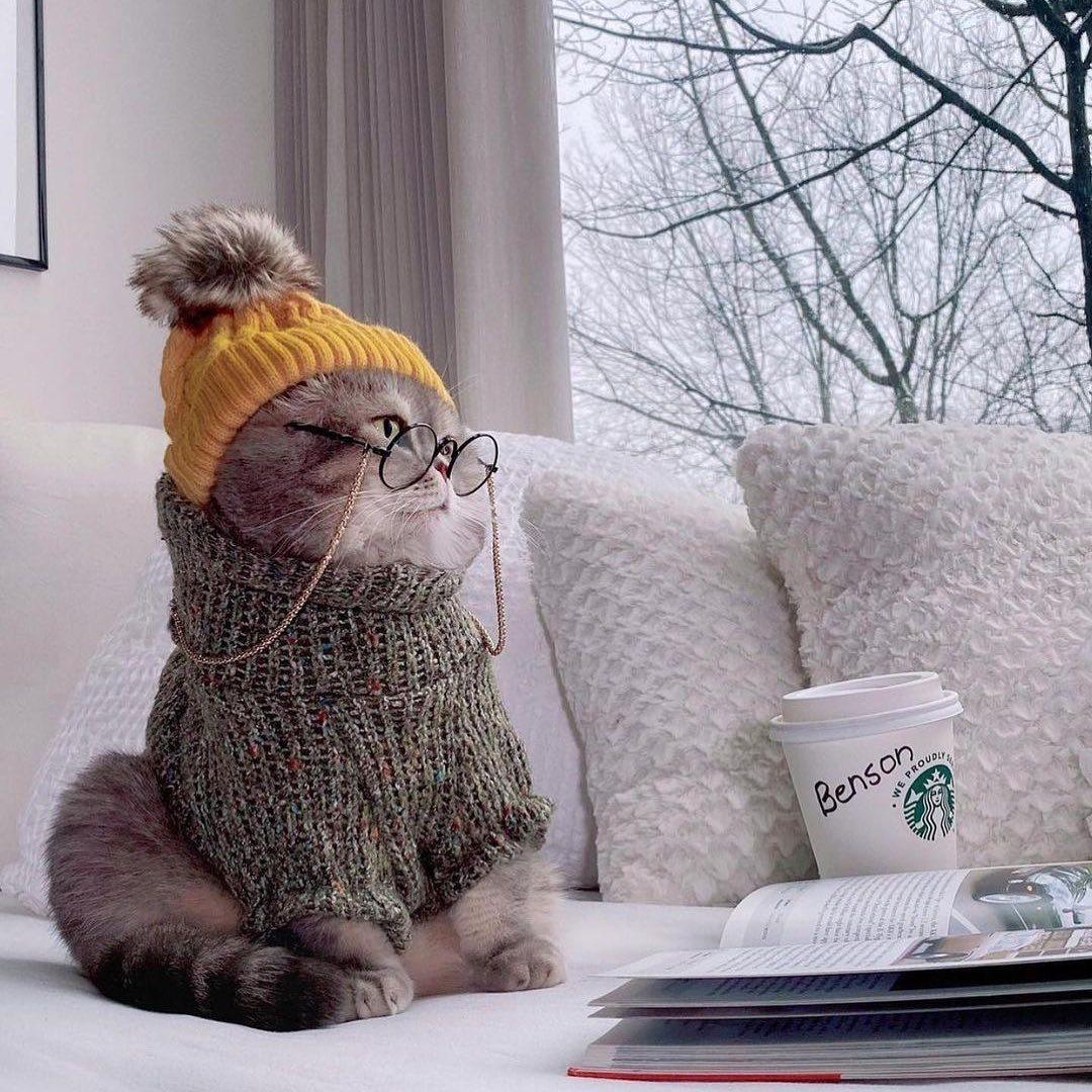 Good morning Guys #cat#cats#kitten#kittens#kitty#kitties#cute#fluffy#animal#animals
