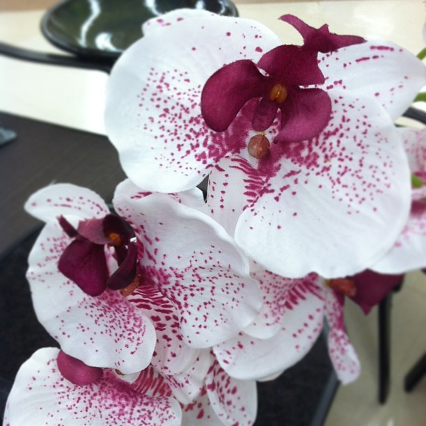 #orchids are beautiful. #orchid #floral #flora #fauna #instagram #work #ralphs #socal  (at Ralphs)