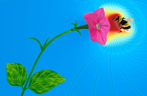 Flowers Communicate With Electricity Flowers may be silent, but scientists have just discovered that electric fields allow them to communicate with bumblebees and possibly other species, including humans. Read more (I KNEW my flowering office cactus was trying to communicate with me before it fell on my lap… then it really got my attention.)