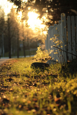 elorablue:  Sun Light By demoiselle lapin On Flickr