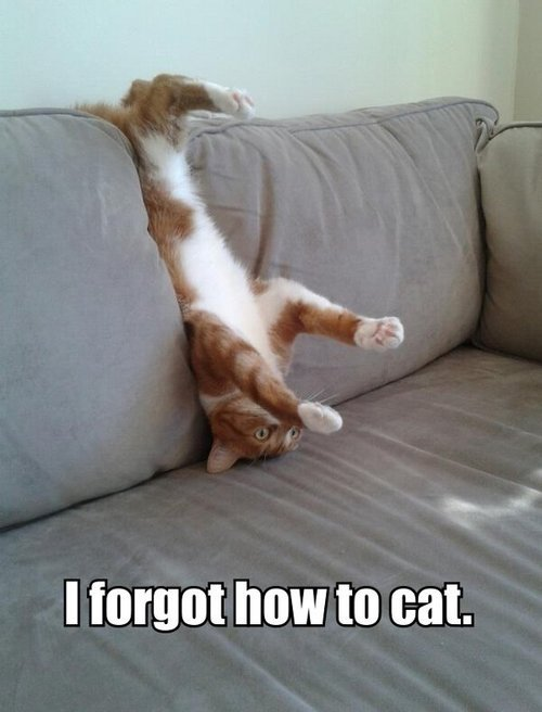 between-letters:  My cat Hobbes would totally do this. He also looks pretty much just like this guy, being an orange tabby himself.