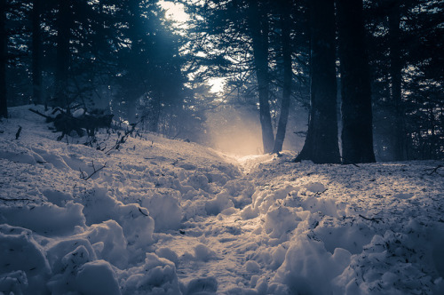samrae01:  Snowy Appalachian Trail (by Nathan Firebaugh)