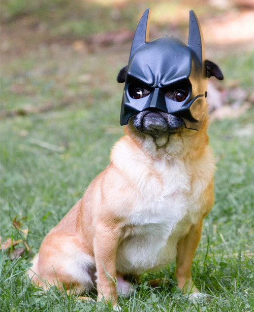 I Am Batman Fuente: Cutespaw