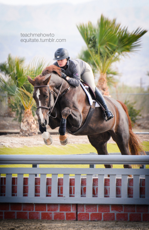 teachmehowtoequitate:  First picture from Thermal!  This horse jumped so well!