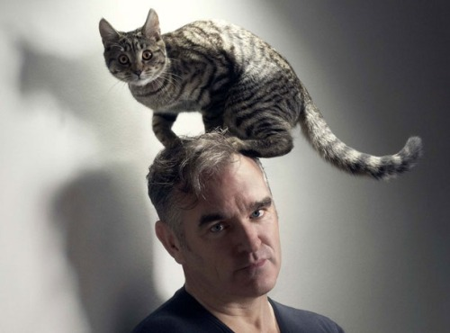 The 10 Best Morrissey Songs / The 10 Best Morrissey Cat Photos