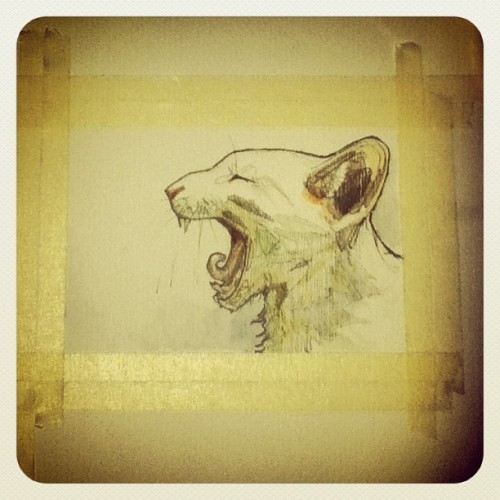 Gato con tuto #lustre #lustrelustre #handdrawn #cat #yawn #gato #bostezo #watercolor #graphite #acuarela #grafito #dibujo #drawing