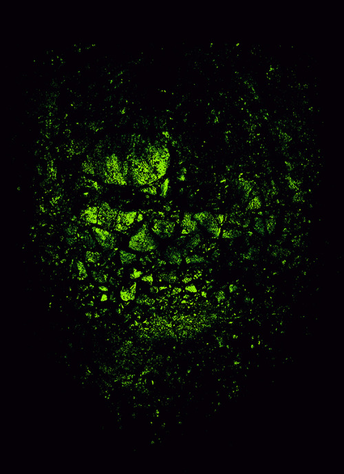 The Incredible Hulk Threadless x Hulk Contest. Vote here > http://www.threadless.com/Hulk/the-incredible-hulk-10/ Prints and other products > http://society6.com/nicebleed/THE-INCREDIBLE-HULK-c1j_Print