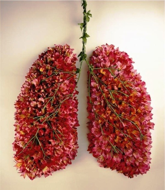 showslow:  Lungs