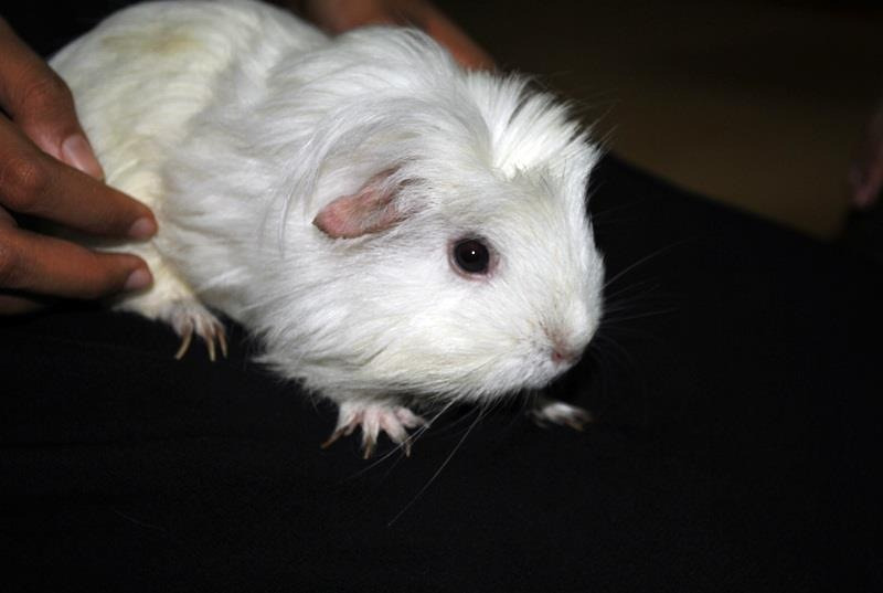 this is snowy c: