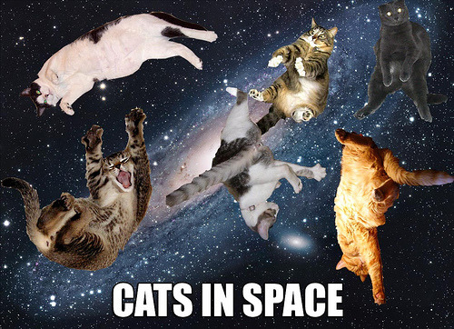 you left your tumblr logged in at the lab, so here are some cats in space for your blog