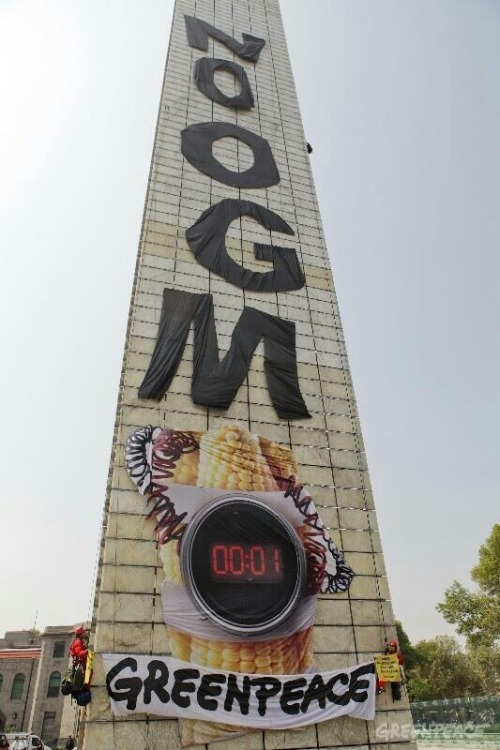 thinkmexican:  Greenpeace Scales the Estela de Luz in Protest of GMO Corn Greenpeace activists scaled the Estela de Luz in Mexico City Thursday morning to send Enrique Peña Nieto a clear message: No GMO! The image of an ear of corn strapped with a ticking time bomb at the bottom of the banner illustrates what scientists and farmers are warming will happen if Peña Nieto allows Monsanto, DuPont and others to mass cultivate genetically modified corn in Mexico, the birthplace of this ancient plant. Aleira Lara of Greenpeace told La Jornada the cultivation of GMO corn in Mexico would put the country's food sovereignty at risk and threaten the 59 species of native Mexican corn. Mexico's Ministry of Agriculture has delayed ruling on nine applications from US biotech companies seeking to operate in five northern Mexican states — Tamaulipas, Sinaloa, Coahuila, Durango and Chihuahua. Hundreds of anti-Monsanto marches are planned worldwide, included at its corporate headquarters in St. Louis, Missouri, for May 25th. Stay tuned for more information and resources! Take Action! Photo: Estela de Luz, DF. Credit: Greenpeace, Prometeo Lucero Stay Connected: Twitter | Facebook