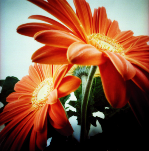 lomographicsociety:  Lomography Tag of the Day - pinhole