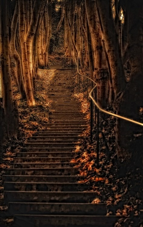 Forest Steps, Wurzburg, Germany, via pinterest