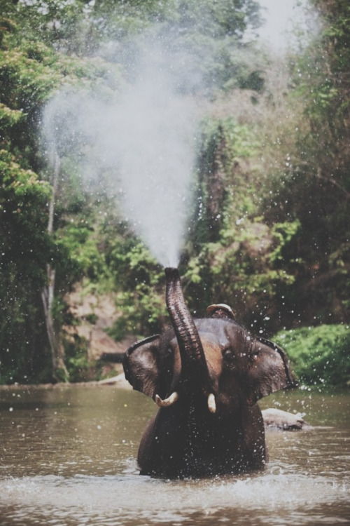 Ohhhh this is my absolute favourite. Elephants.